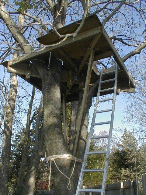 Treehouse Phase 2