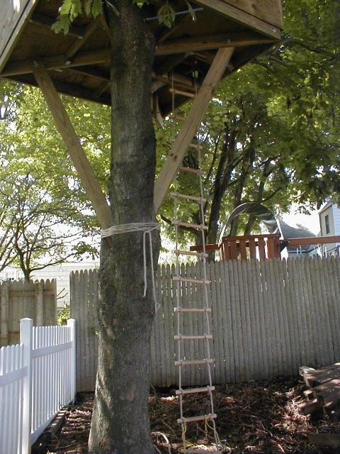 Treehouse Phase 5